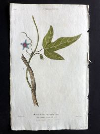 Thornton 1812 Hand Col Botanical Print. A Passion Flower